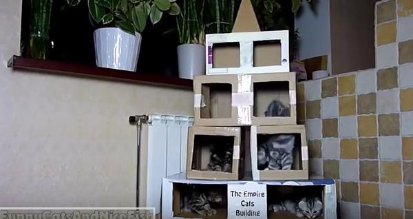 Небоскреб для кошек