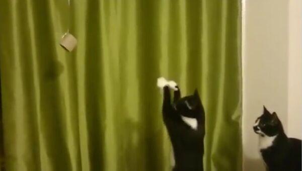 Кот-заклинатель