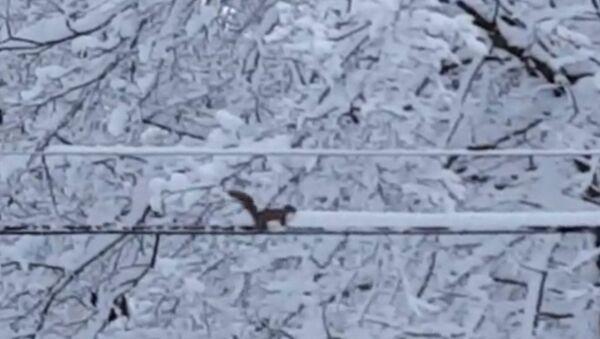 Белка-снегоуборщица