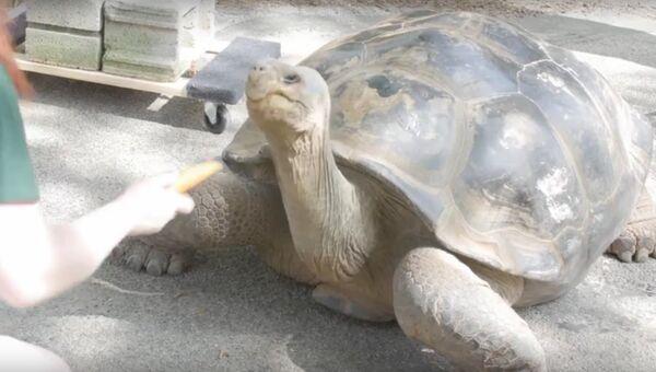 Как сдвинуть с места гигантскую черепаху