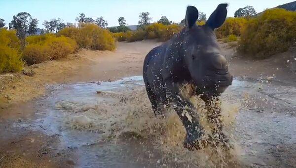 Малыш-носорог