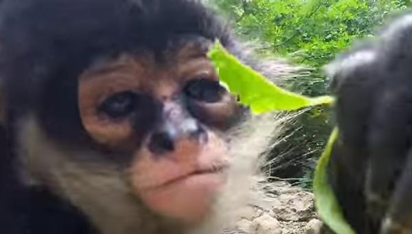 Совсем как люди: селфи от обезьянок