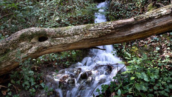 Весенний ручей в горном лесу в окрестностях поселка Никита в Крыму