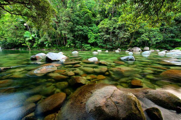 Тропический лес Дейнтри
