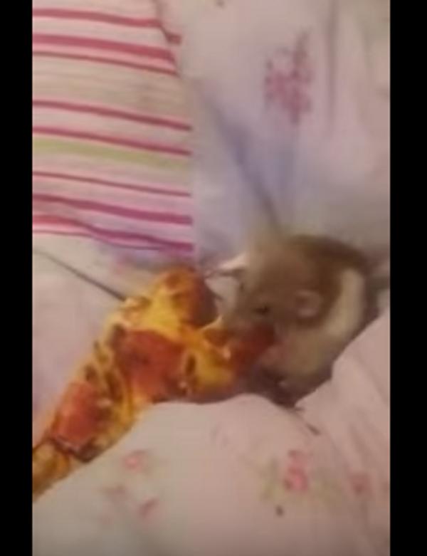 Пицца в постель