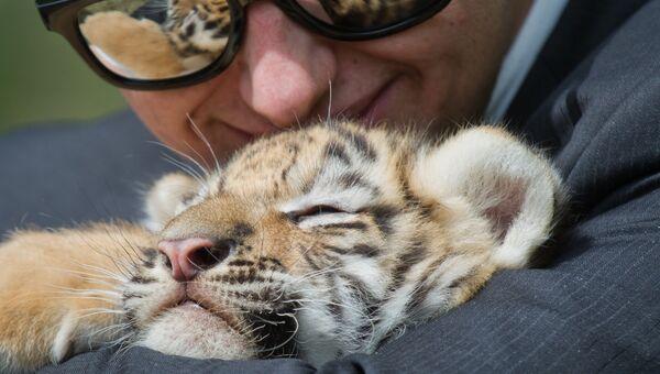 Тигренок с одним из посетителей сафари-парка Тайган