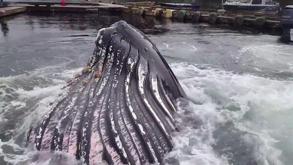Кит напугал рыбаков на Аляске