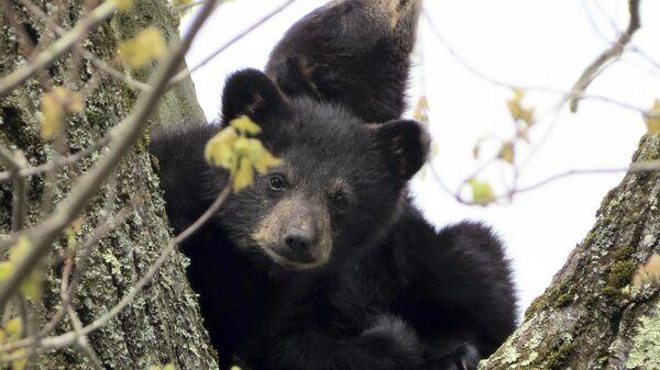 Медвежата сидят на дереве
