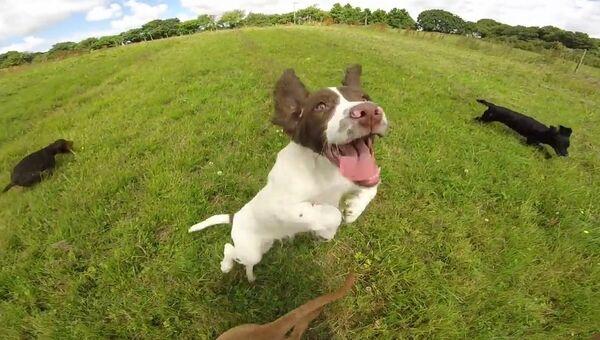 Что нужно щенкам для счастья?