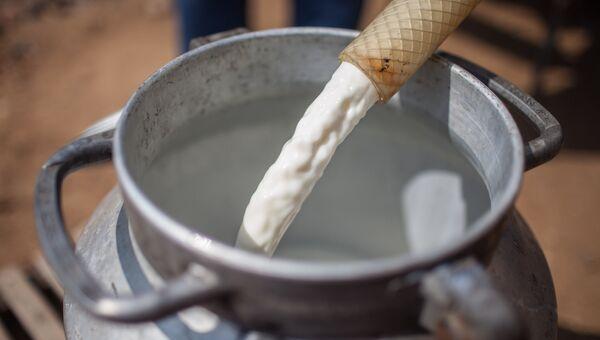 Молоко на частной сыроварне подмосковного фермера. Архивное фото
