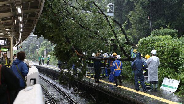 Упавшее дерево на железнодорожной станции в Токио
