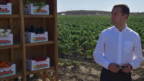 Председатель правительства РФ Дмитрий Медведев во время ознакомления с ходом уборки урожая овощных культур в Астраханской области. 2 сентября 2016
