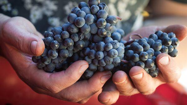 Винодельческое хозяйство UPPA Winery в Крыму