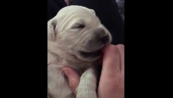 Как убаюкать щенка