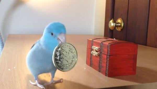 Бережливый попугай