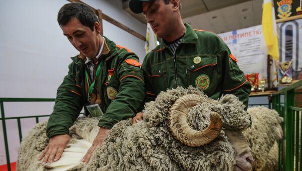 Баран породы Джалгинский меринос на 18-й Российской агропромышленной выставке Золотая осень на территории ВДНХ