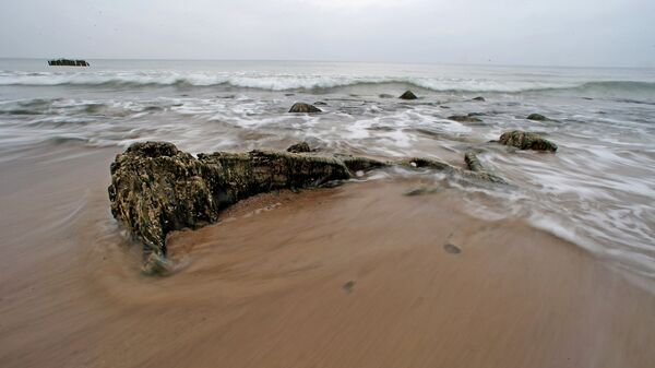 Берег Балтийского моря, где вода отступила от берега на 20 метров, обнажив пни реликтовых деревьев