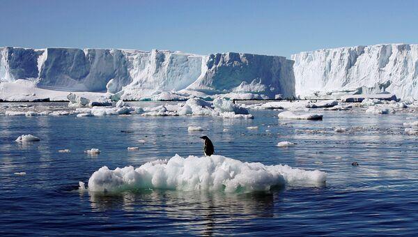 Пингвины Адели на вершине льда в Восточной Антарктиде