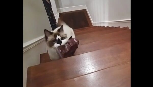 Компиляция котов
