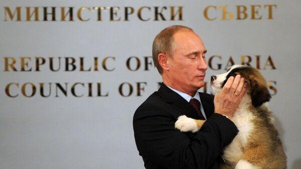 Владимир Путин с собакой, подаренной ему болгарским премьер-министром Бойко Борисовым после их пресс-конференции в Софии, Болгария