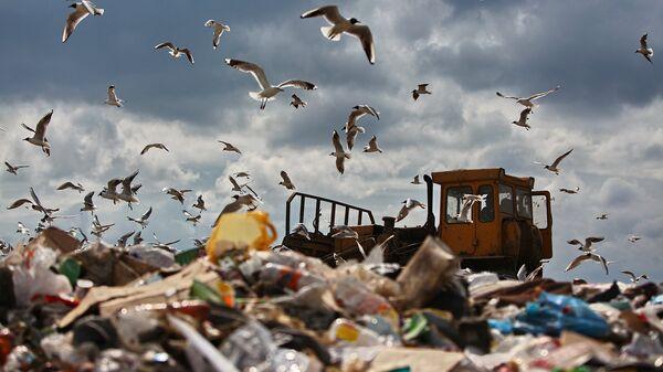 По мнению 44% россиян, наибольшую экологическую опасность представляют бытовые отходы