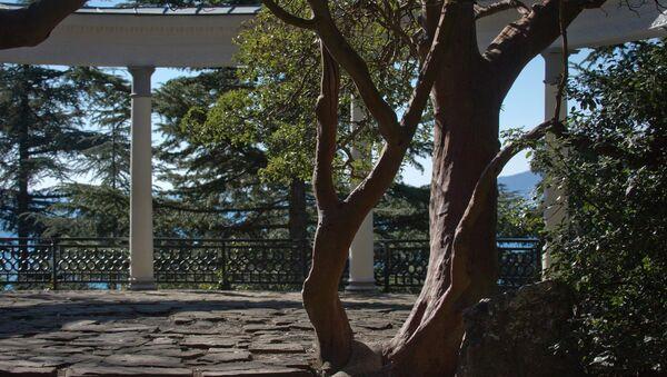 Никитский ботанический сад в Крыму. Архивное фото.