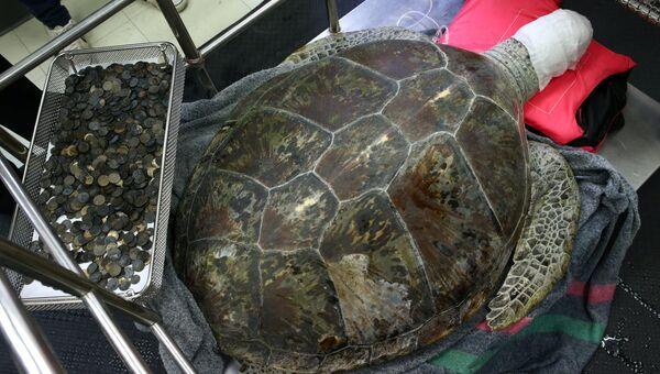 Морская черепаха после операции по удалению монет в Бангкоке. 6 марта 2017