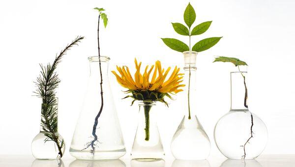 Образцы растений в лаборатории