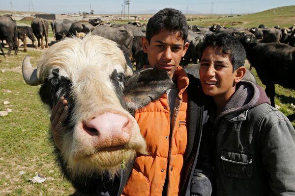 Иракские фермеры из Бадуша, покинувшие свою деревню в результате боевых действий, вернулись за своими буйволами