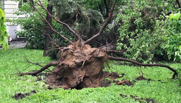 Последствия урагана в Москве. Архивное фото