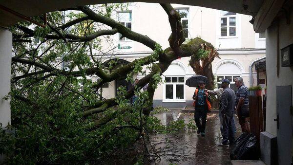 Последствия шквалистого ветра в Москве. Архивное фото