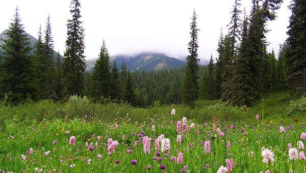 Тут произрастает 31 охраняемый вид сосудистых растений, 11 из которых были занесены в Красную книгу России