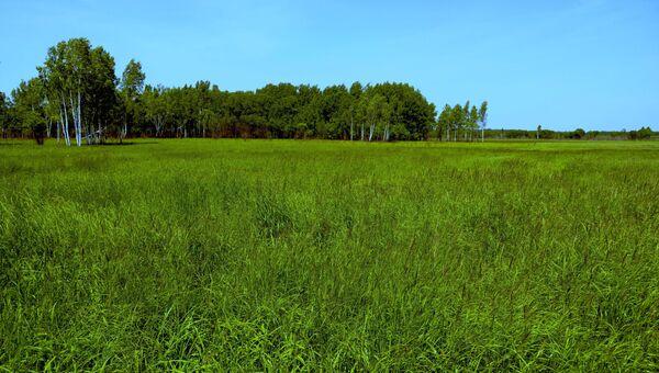 Участок земли, предоставленный в аренду как дальневосточный гектар. Архивное фото