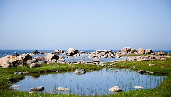 Часто рядом с этим местом плавает пара белых лебедей. Где-то недалеко находится их гнездо