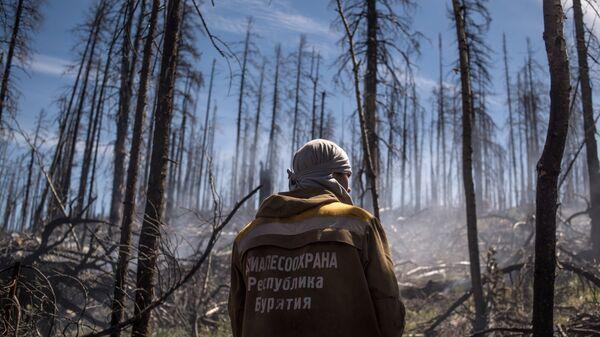 Сотрудник Авиалесоохраны Республики Бурятия во время тушения природного лесного пожара
