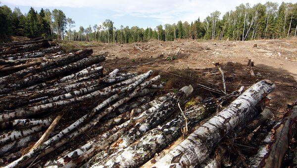 В Иркутской области запустили систему для борьбы с незаконными рубками леса