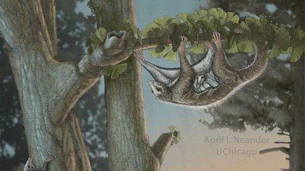 Так в представлении художника выглядели летающие белки юрского периода
