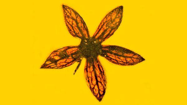 Цветок, найденный в бирманском янтаре