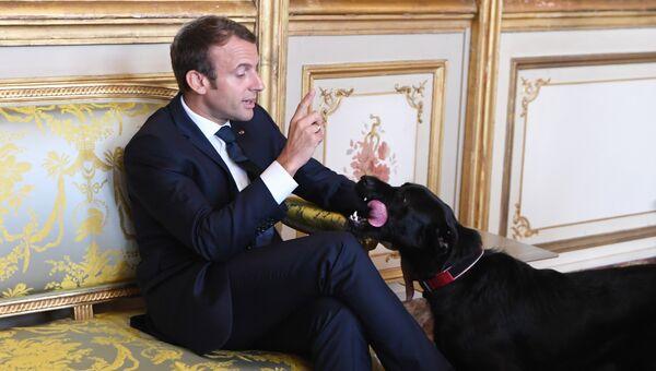 Президент Франции Эммануэль Макрон со своей собакой Немо в Елисейском дворце в Париже. 30 августа 2017 года