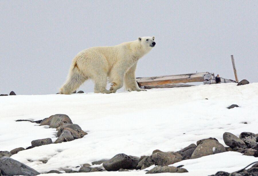Русская Арктика