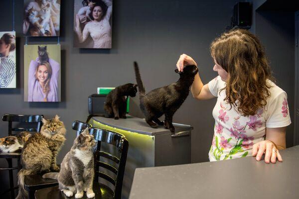 В котокафе Республика кошек в Санкт-Петербурге, где ежемесячно проходят благотворительные акции Все оттенки кошачьего по раздаче кошек из городских приютов в добрые руки