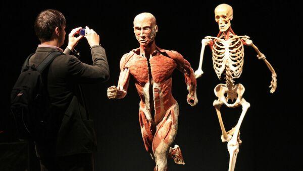 Анатомическая выставка реальных человеческих тел Body Worlds в Лейпциге, Германия. 3 июня 2010