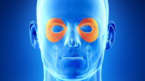Иллюстрация круговой мышцы глаза