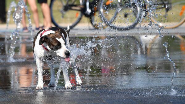 Собака пьет воду из фонтана
