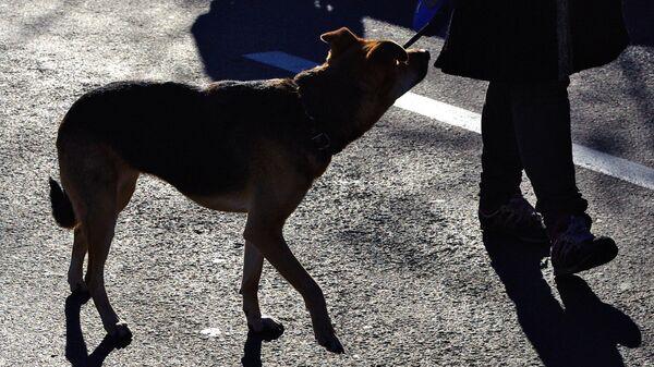 Собака на улице. Архивное фото