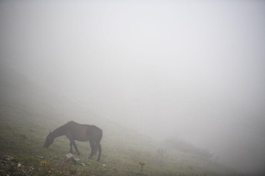 В летнее время организованы конные прогулки по горам
