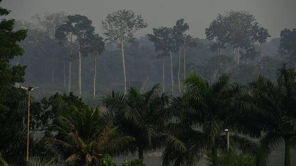 Тропические леса Бразилии