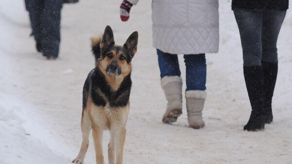 В Совфеде поддержали проект о штрафах за жестокое обращение с животными