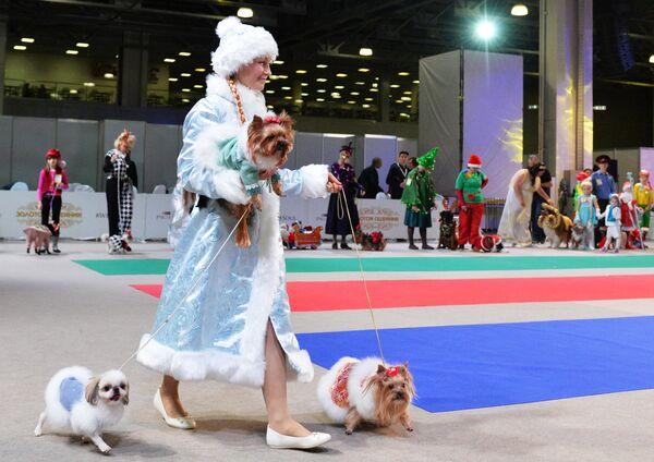Собаки и их владельцы участвуют в конкурсе костюмов на выставке Золотой ошейник-2016 в Москве