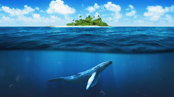 Кит под водой
